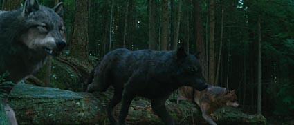 in f nf schritten zum twilight werwolf werwolf t shirt conditioner haarspitzen haarpflege. Black Bedroom Furniture Sets. Home Design Ideas